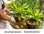Steps To Growing Fern Tree In...
