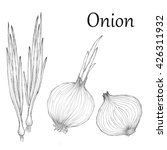 onion hand drawn set. vintage... | Shutterstock .eps vector #426311932
