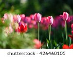 amazing nature concept of pink... | Shutterstock . vector #426460105