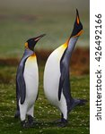 Pair Of Penguins. Small And Bi...