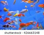 Fish In An Aquarium  Fish In A...