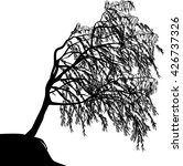 weeping willow isolated on... | Shutterstock .eps vector #426737326