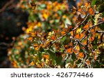Monarch Butterfly Biosphere...