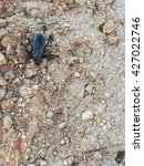 Small photo of Made a friend in Gunlock State Park