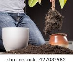 young gardener transplanting a...   Shutterstock . vector #427032982