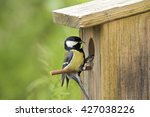 Great Tit  In Front Of Nest...
