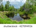 swamp in the siberian forest ... | Shutterstock . vector #427094926