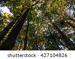 tropical rainforest landscape ... | Shutterstock . vector #427104826