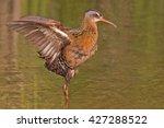 a virginia rail  rallus... | Shutterstock . vector #427288522