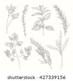 black and white ink herbs and... | Shutterstock .eps vector #427339156