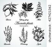 graphic set aromatic plants.... | Shutterstock .eps vector #427421362