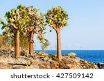 Cactus Forest And Ocean At...