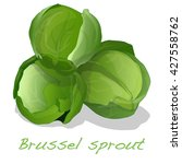 brussels sprout vector isolated ... | Shutterstock .eps vector #427558762