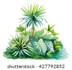 tropical leaves watercolor | Shutterstock . vector #427792852