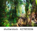 fantasy mystical tropical mossy ... | Shutterstock . vector #427855036
