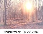 morning in the autumn forest... | Shutterstock . vector #427919302