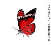 beautiful red butterfly flying... | Shutterstock . vector #427927912