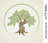 retro style olive tree vector... | Shutterstock .eps vector #427978882
