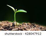 young sprout in springtime   | Shutterstock . vector #428047912