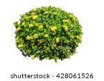 bush and yellow flower isolated ... | Shutterstock . vector #428061526