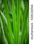reed | Shutterstock . vector #428126566