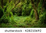 Small photo of overgrown with liana thicket