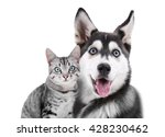 Stock photo cat and dog together isolated on white 428230462