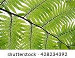 natural green fern | Shutterstock . vector #428234392
