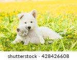 Stock photo puppy lying with kitten on a dandelion field 428426608