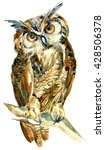 Stock photo watercolor owl on a branch isolated on white background cute long eared owl staring with orange 428506378