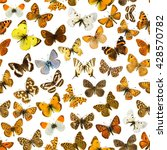 many different butterflies on a ... | Shutterstock . vector #428570782