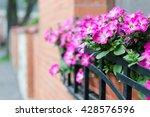 Petunia In A Pot And Brick Wal...