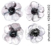 anemones painted with... | Shutterstock . vector #428621602