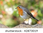 a portrait of a little and... | Shutterstock . vector #42873019
