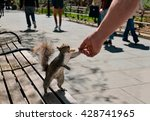 Squirrel Eating Peanut From Ma...