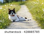Stock photo cat sitting on the alley 428885785