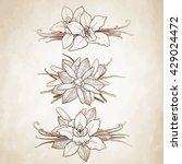 graphic vanilla flowers... | Shutterstock .eps vector #429024472