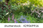 old fashioned flowers in the... | Shutterstock . vector #429069916