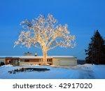 Christmas Tree In Minnesota