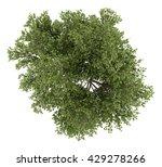 top view of austrian oak tree...   Shutterstock . vector #429278266