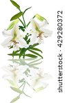 illustration with light lily... | Shutterstock .eps vector #429280372