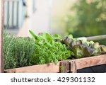 raised bed on balcony | Shutterstock . vector #429301132