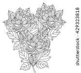 peony bouquet. vector. coloring ... | Shutterstock .eps vector #429323818