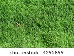 Fresh green grass. Ideally for your use - stock photo