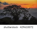 Costa Rica Cloud Forest At...