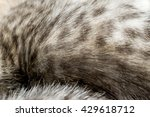 close up of little kitten of... | Shutterstock . vector #429618712