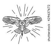 hipster owl logo template....   Shutterstock .eps vector #429637672
