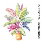 potted plant of calathea... | Shutterstock . vector #429658672