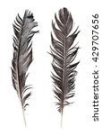 feathers isolated on white... | Shutterstock . vector #429707656