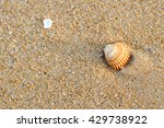 Small photo of Acanthocardia tuberculata shell with sand as background, flat lay style top side view